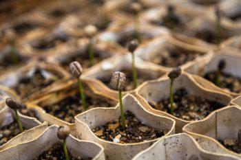 les semis